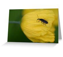 Black Bug On Yellow Greeting Card