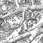 mangrove magic by Juliana Warne