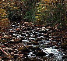 A River Runs Through It by Terri~Lynn Bealle