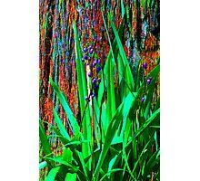 Psychedelic RainForest Series #2 - Yarra Ranges National Park, VIctoria Australia Photographic Print