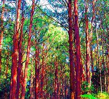 Psychedelic RainForest Series #3 - Yarra Ranges National Park , Marysville Victoria Australia by Philip Johnson