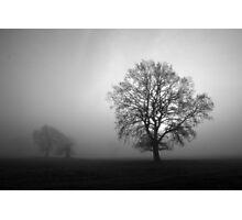 Winter tree's Photographic Print