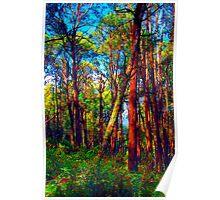 Psychedelic RainForest Series #4 - Yarra Ranges National Park , Marysville Victoria Australia Poster