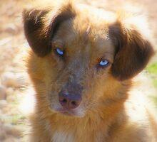 Blue Eyes by binjy