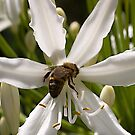 Bee hind by Ben Shaw