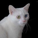 The Eyes by GailDouglas