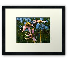 Withering Flowers Framed Print