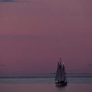 Pink Sky by Jamie Lee
