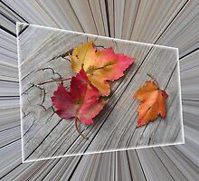 Fall by Kurt Hawkins