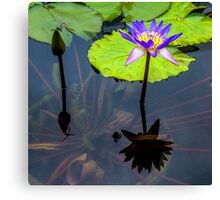 Accent Art - Water Lilies & Dragonfly Canvas Print