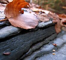 Leaves and Mudstone by alfalfascout