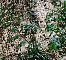 Rainforest Patterns by Penny Smith