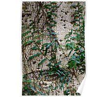 Rainforest Patterns Poster