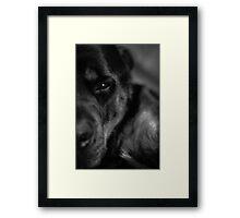 Black and white Moody Milo Framed Print