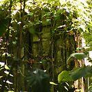 Jungle Rock by Rachel Hoffman