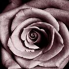 nether rose  by Sharon  Taylor