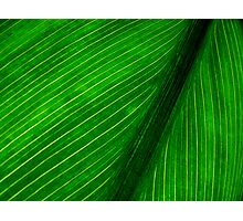 Nature's Pin Stripe Photographic Print