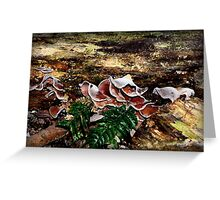 A Black Snake, Leeches and lots of Fungi Greeting Card