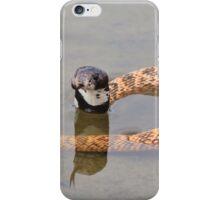 Shield Nose Snake - Dangerous Beauty iPhone Case/Skin