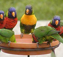beautiful birds by Jahana Bossard