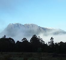 my beautiful Mt Murchison, early morning (Rosebery view) - - looming over the trees by gaylene