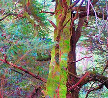 Psychedelic RainForest Series # 6 - Yarra Ranges National Park , Marysville Victoria Australia by Philip Johnson