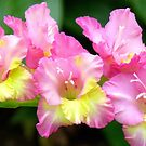 An Admiral  Spray Of Gladness! - gladiolus - NZ by AndreaEL