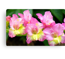 An Admiral  Spray Of Gladness! - gladiolus - NZ Canvas Print