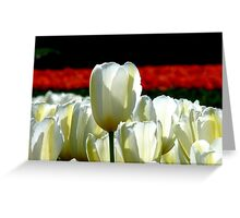 Can You See The Red Ones Yet! - Tulip Plantation - NZ Greeting Card