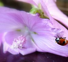 Ladybird, Ladybird... Fly Away...! - Ladybug - NZ by AndreaEL