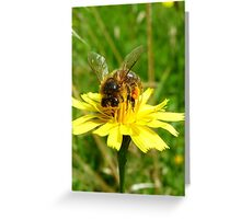 Totally Gorged! - Bee On Yellow Weed - NZ Greeting Card