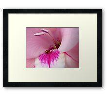 The Lady Is Glad... - Ladybug On Gladioli - NZ Framed Print