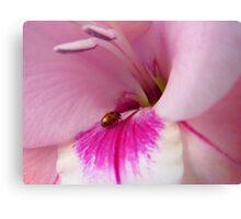 The Lady Is Glad... - Ladybug On Gladioli - NZ Canvas Print