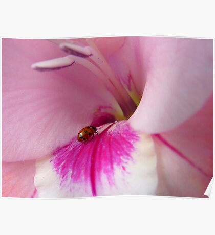 The Lady Is Glad... - Ladybug On Gladioli - NZ Poster