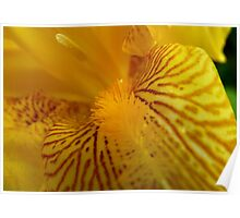 Inner Beauty! - Iris Flower - NZ Poster