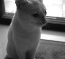 Cat by Yogesh Sane