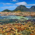 Coral Exposed - Lord Howe Island Lagoon October 2007 by bdimages