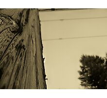 Touch the Texure: Wing-ed Wood (sepia) Photographic Print