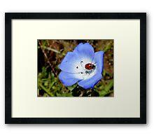 The Cyan Lady... - Ladybird - NZ Framed Print