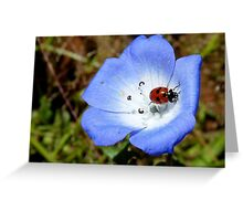 The Cyan Lady... - Ladybird - NZ Greeting Card