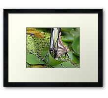 Who's looking ? Framed Print