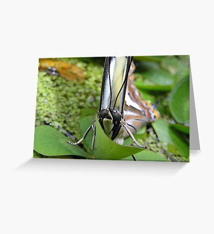 Who's looking ? Greeting Card
