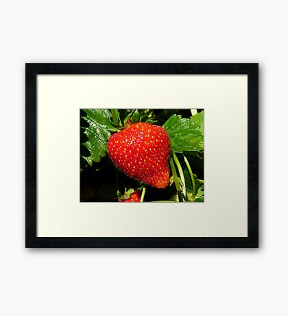 Natural Sweets - Fresh Garden Strawberry - NZ Framed Print