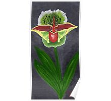 Costa Rican Orchid Poster