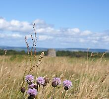 Culloden Thistle by Beth Oberle