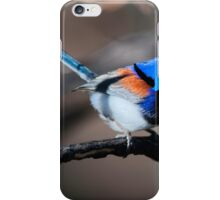 Variegated Wren iPhone Case/Skin