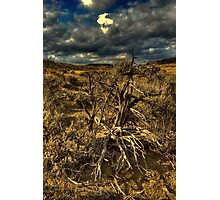 Sage Skeleton #54 Photographic Print