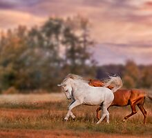 Grey and red stallions by Julia Shepeleva