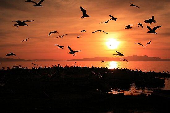 Sunset Flights by Gene Praag