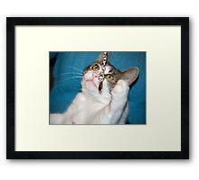 Catspaw Framed Print